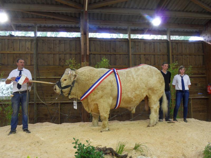Escadron, EARL Minard, Neuvy-le-Barrois (18), champion senior et grand champion. © AA